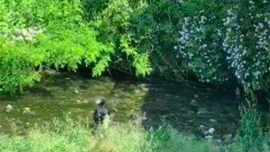 Brenda il cane di Elena gioca in un corso d'acqua