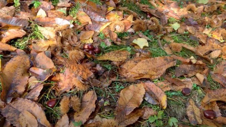 Foglie d'autunno e castagne