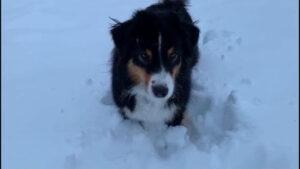 Brenda il cane di Elena nella neve